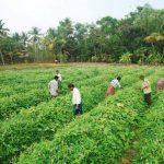zero budget natural farming